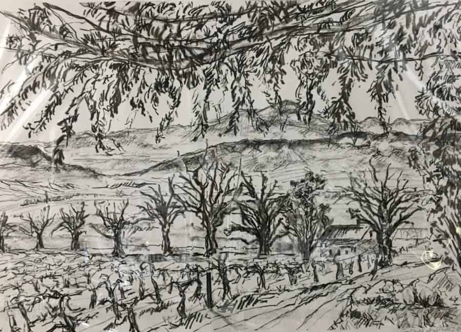 Charcoal on paper drawing of vineyards and trees with mountains in the background.