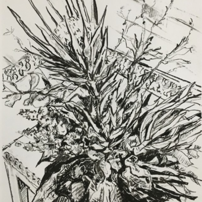 Expressionist charcoal drawing of protea in vase on Persian Rug. Black and white.