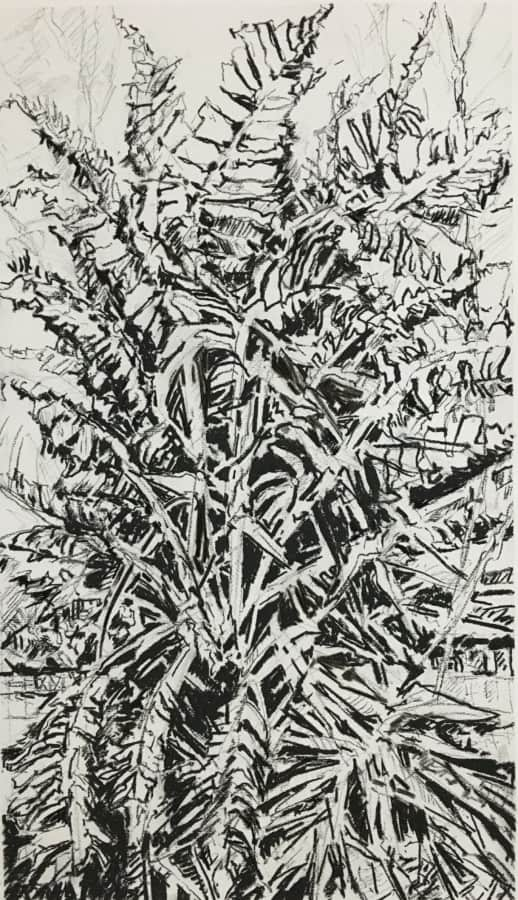 Expressionist charcoal drawing on paper of a tree strelitzia with vivid lines and leaf shapes.